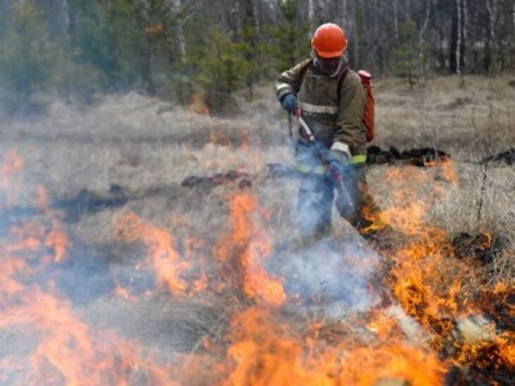 Оценка ущерба от лесных пожаров